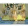 grass shop windowbox yellowfph yellow restaurant