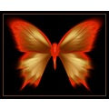 Butterfly digitalartclub
