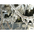 ice tree water winter