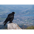 bird wildlife animal mountain switzerland