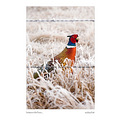 birds color frost