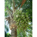 nature tree palm