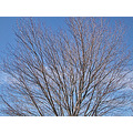 tree clouds winter nature naturefph