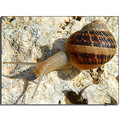 animals snail macro znuber