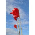 wind prowd red flags
