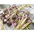 The WELL cooking garlic harvest gardening purplegarlic crop