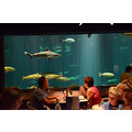 seaworld orlando florida restaurant underwater people fish