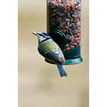 pimpelmees blue tit bird feeder