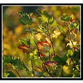 autumn colours leaves nature somerset somersetdreams