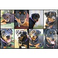 our rottweiler makeda growing up in 8 pictures