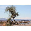 the shoe tree and the amboy crater