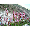 Summer Vacation,,,, Guess the Flowers.. I found them at 11,500 ft. View Original.