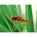 dragon fly nature macro znuber