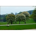 england chatsworth park