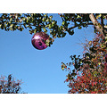 holiday christmas winter ornaments decorations holidayfph