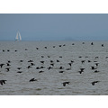 birds wildlife sailboat water lake