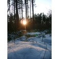sunset winter forest snow nature Bohemia