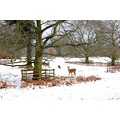 Winter wonderland at Bradgate Park