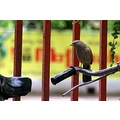 zespook Lucknow India bird