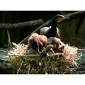 switzerland basel zoo animal bird cormorant switx basex zoox animx birdx