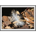 feather naturepark florida
