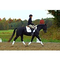Tux and I at a recent schooling clinic.  Ain't he handsome?