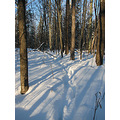 winter trail shadows snowshoe woods nature trees