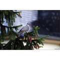 animal pigeon bird tree evening rain