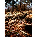 pinecone forrest sticks ground nature fall