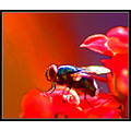 insect fly pest macro