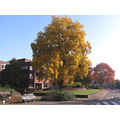 Series Autumn Town Almelo Autumncolors Fall