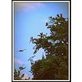 Evening Birds Lake Pankey Wildspirit wildlife picasa picnic