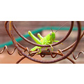 grasshopper very green wire bed frame kerbside collection littleollie
