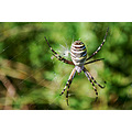 spider trapper nature insect summer