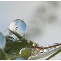 macro grass dew drop