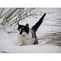 cat snow winter game white