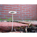 fungus garden morning