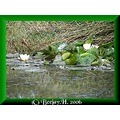 Wild waterlillies and reflections.  Sweeeeeeet.   ;) I love peace and quiet as you may have noti...