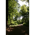 woods trees path swithland leicestershire