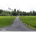 road perspective green coconut paddy