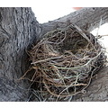 bird nest tree
