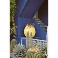 ...garden in Marrakech which was bought by Yves Saint Laurent