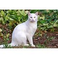 "My daughter's cat ""Nielo"" in our garden in Trafalgar, KZN"