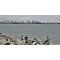bay view park emeryville evillefph bayareaviewfph oakland
