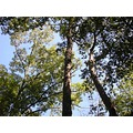 forest woods trees treetops