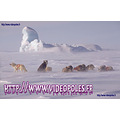 Arctic Arctique Ice Glace Sledge Traineau Iceberg Antarctic pole chien