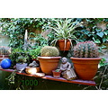 garden plants cactus sculpture 1000 ceramic ball