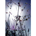 'Early Morning Dew': Dew on blades of grass. Taken from a low angle ( igot very wet lying on the ...