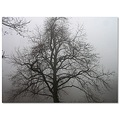 sweetgumtree fog