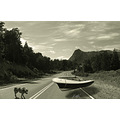 road route landscape dog freedom camino ruta perro animals paisaje surrealismo